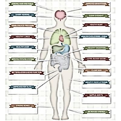 感染と病原体 | 健康トピックス
