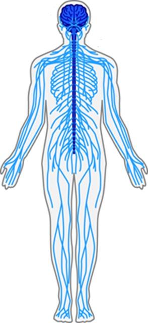 自律神経の乱れ3パターンとは | 健康トピックス