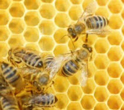 ハチミツと乳児ボツリヌス症について | 薬剤師トピックス