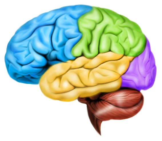 扁桃体ハイジャックとは | 賢脳トピックス