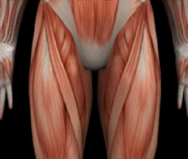 運動嫌いでもしっかりと筋肉量を増やすことができる | 健康トピックス