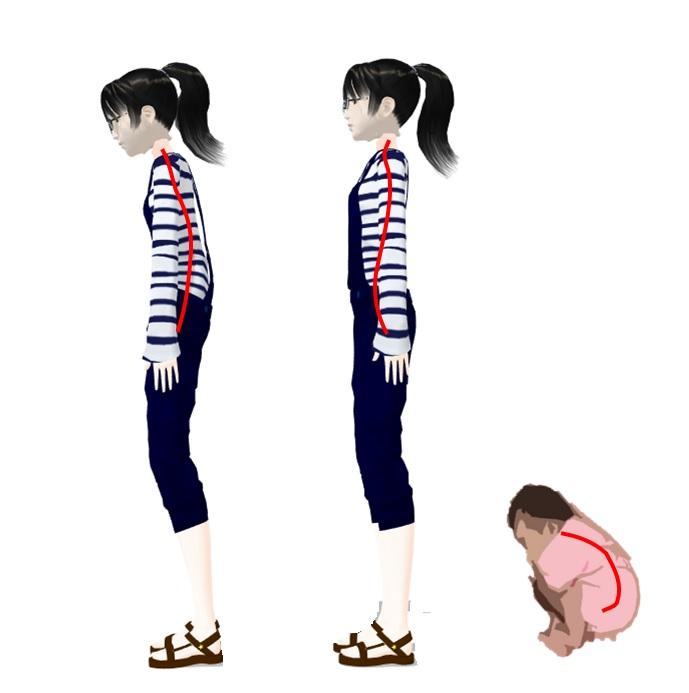 ヒトの背骨は生まれた時からS字型をしていない | 健康トピックス