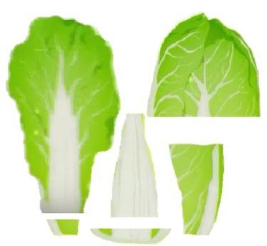 白菜の部位別利用法について | 健康トピックス