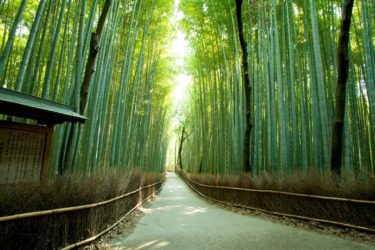 竹の不思議いろいろ | 薬剤師トピックス