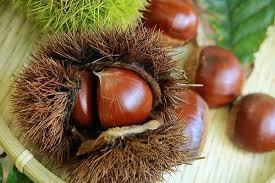 抗酸化成分が豊富な秋の味覚、栗 | 健康トピックス